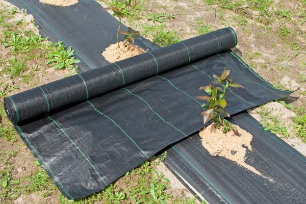 AGROTKANINA MATA  1,1x50m 110 cm 90g/m2 UV Czarna