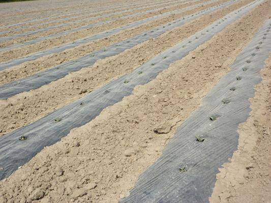 SZPILKI KOŁKI 100 szt 19 cm do agrowłókniny